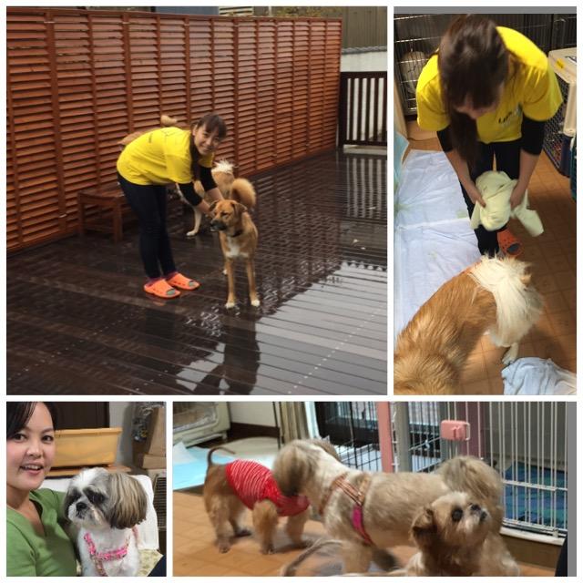 地域のボランティア活動に参加するGlobal Outreach プログラムでは動物シェルター施設での清掃活動などを行いました。